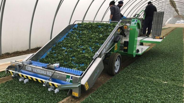 La demanda del consumo de fruta y verdura influirá en el comercio de alimentación, según Fruit Logistica